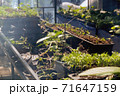 Greenhouse with cultivation of several plants 71647159