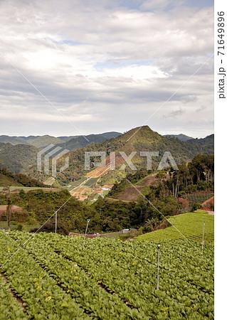 ベトナム、ダラット高原の段々畑での野菜栽培 71649896