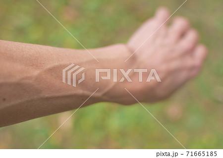 血管が浮き出た男性の腕 71665185