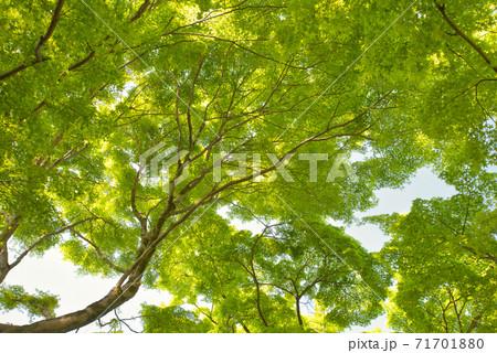 【京都府】本堂の檜皮屋根葺き替え工事が完了した新録の清水寺境内 71701880