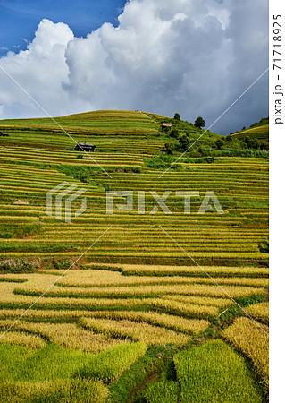 VietnamのMu Cang Chaiの収穫期の黄金色に輝く棚田 71718925
