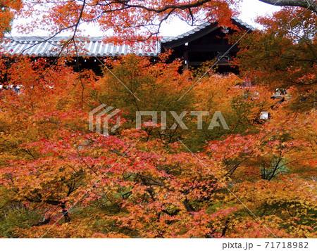 京都・名刹のダイナミックな紅葉 215 71718982