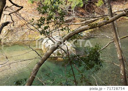 芦生の森の中の川を背景にした木の枝 71728754