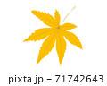 一枚黄色のモミジの葉 紅葉の色づき情報 71742643