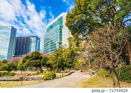 (東京都)梅が開花した浜離宮恩賜庭園 71743629