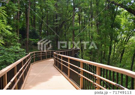【町田市】芹ヶ谷公園のハイキングコース 71749113