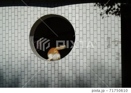 月見窓に登り冷えた身体にポカポカの朝日を浴びる仲良しの野良猫お兄ちゃんと捨て猫の妹 71750610