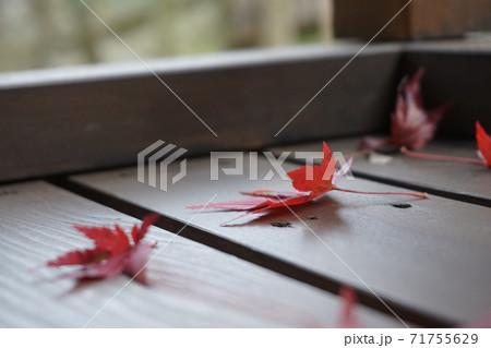 ベランダに落ちてきた赤く染まったモミジ 71755629