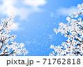 桜 桜吹雪 青空 71762818