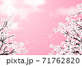 桜 桜吹雪 ピンク 71762820