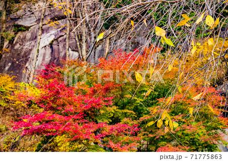 秋の紅葉豊かな山梨県甲府市にある昇仙峡 71775863