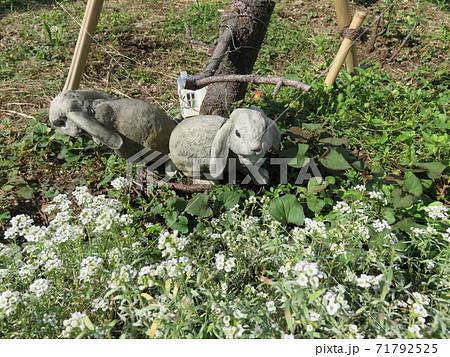公園の花壇に置かれているウサギのガーデンオーナメント 71792525