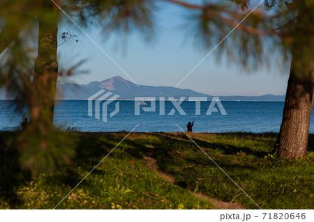 びわ湖と立ち木と青空の中ワーケーション 71820646