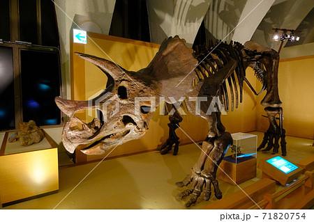 自然史博物館の恐竜の骨格標本 71820754