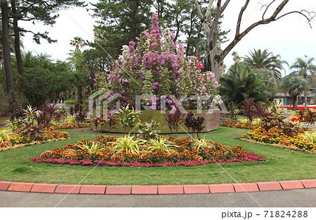 宮崎 青島亜熱帯植物園(宮交ボタニックガーデン青島)のロータリー花壇 71824288