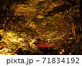 小國神社の紅葉風景 71834192