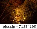 小國神社の紅葉風景 71834195