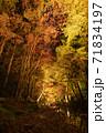 小國神社の紅葉風景 71834197