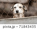 Homeless dog in a shelter for dogs 71843435