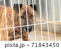 Homeless dog in a shelter for dogs 71843450