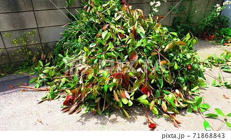 庭木の剪定後に積み上げられた葉などの風景 71868843