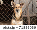 Homeless dog in a shelter for dogs 71886039
