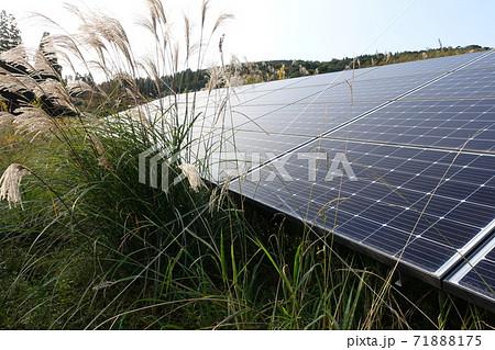 セイタカアワダチソウやススキが生えた太陽光発電所 71888175