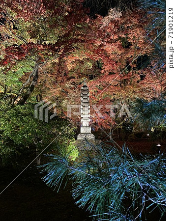 京都の嵐山、宝厳院のライトアップ 71901219