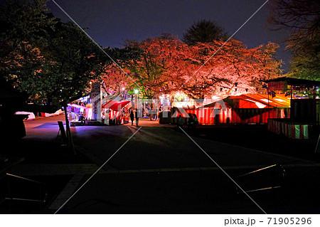 川越大師 喜多院の夜桜のお花見会場 71905296