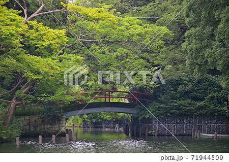 東京都大田区南千束にある洗足池公園 洗足池弁財天へ架かる赤い橋 71944509