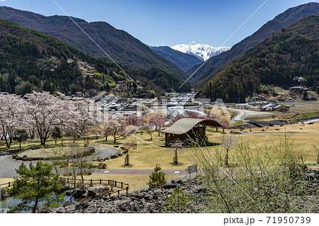 大鹿村、桜咲く大西公園と残雪の南アルプス赤石岳 71950739