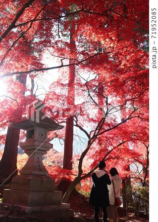 七色の紅葉と灯篭と恋人たちの時間 71952085