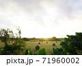 朝日が神々しい牧草地 71960002