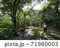 森林浴、お散歩 71960003