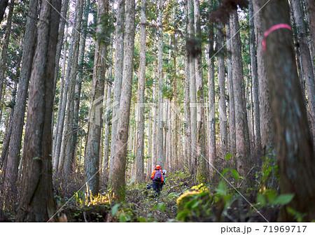 林業、草刈り機を持って森林で働く女性労働者 71969717