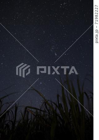喜界島のサトウキビ畑と冬の夜空のオリオン座 71982227