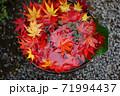 鉢と紅葉 71994437