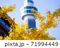 横浜の紅葉・銀杏 71994449