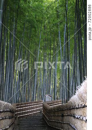 竹林の小径が美しい京都の寺社風景 72002886
