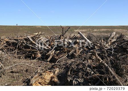 台風の流木の処理をした木材の置かれている江戸川河川敷風景 72020379