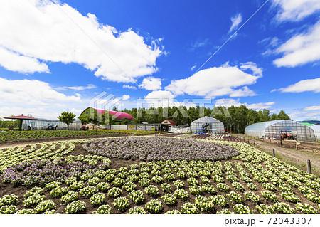 初夏の青空と四季彩の丘 北海道美瑛町 72043307