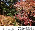 秋の色付いた木々 72043341