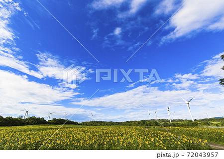 青空と布引高原のひまわり 福島県郡山市 72043957