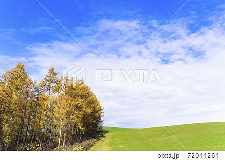 青空と紅葉したカラマツ林 北海道美瑛町 72044264