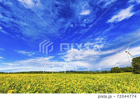 青空と布引高原のひまわり 福島県郡山市 72044774