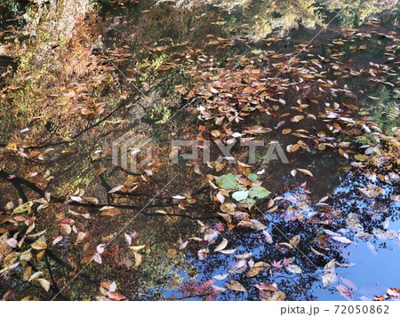 秋色のアート(水面の落葉と映り込み) 72050862