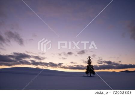 冬の美しい夕暮れの空と雪原に立つマツの木 美瑛町 72052833