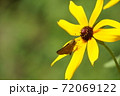 昆虫 花 蝶 72069122