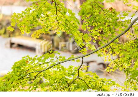 もみじの合間から見える公園のベンチ 72075893