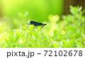 昆虫 葉 トンボ 72102678